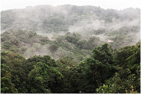 fog in the puerto rico jungle